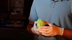 Des truffes de chien en 3D pour détecter les engins