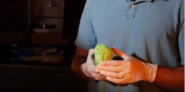 Des scientifiques recréent des truffes de chiens en 3D pour détecter des engins