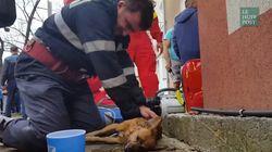 Ce pompier a sauvé un chien grâce à du
