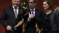 Le chien russe offert à la France pour remplacer Diesel serait