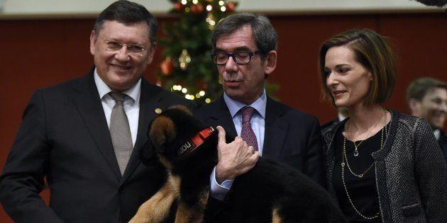 Dobrynya, le chien offert par la Russie pour remplacer Diesel, lors de sa présentation à l'ambassade...