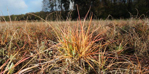 Un herbicide de Bayer retiré du marché