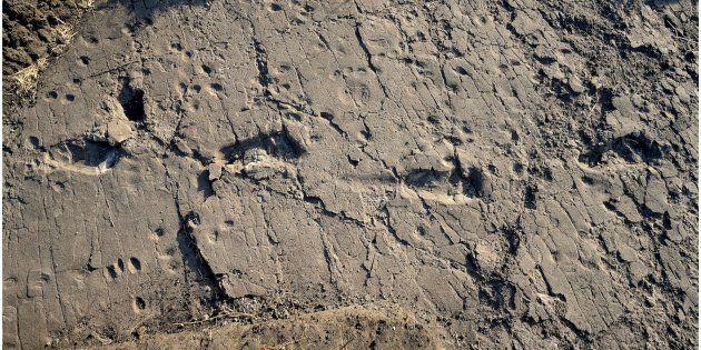 Les empreintes de pas de plusieurs australopithèques ont été retrouvées en