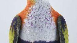 Grâce à ces photos, vous ne verrez plus les pigeons de la même