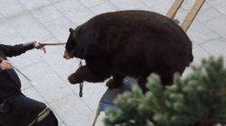 Un montreur d'ours sur le marché de Noël de Hazebrouck fait