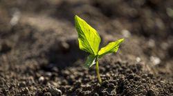 Une pétition pour contraindre l'Europe à protéger les sols, ressource cruciale mais