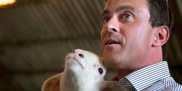 Pendant sa campagne pour la primaire de 2012, Manuel Valls en visite dans la ferme de François Brun,...
