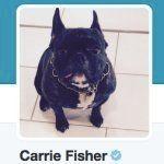 Carrie Fisher avait fait de son chien Gary une vraie