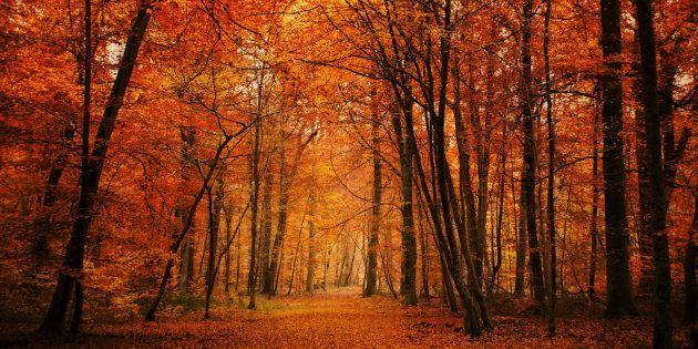 Eco Tree possède 100 hectares dans 6 forêts différentes, mais pas encore celle de Fontainebleau, en photo ci-dessus.