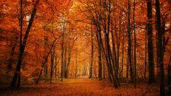 Ce site vous permet d'épargner et de sauver des arbres en même
