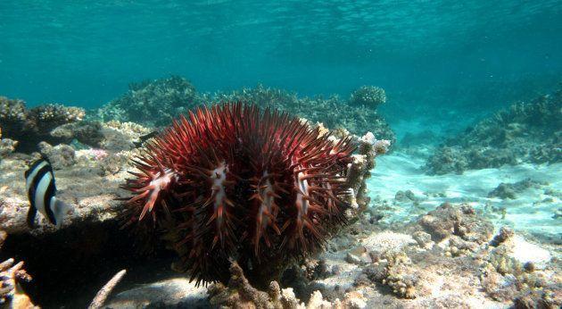 Pour sauver la Grande barrière de corail, il faut s'armer de...