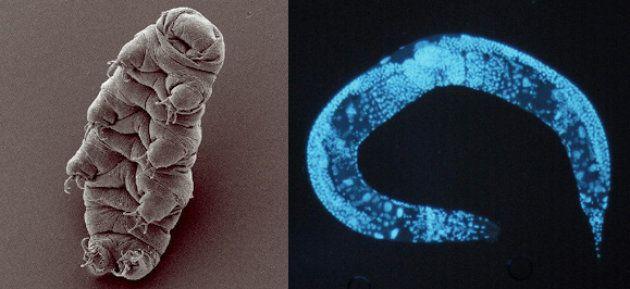 Voici les premiers êtres vivants que l'on pourrait envoyer vers une autre