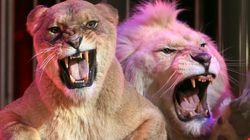 L'Irlande et l'Italie interdisent l'emploi d'animaux sauvages dans les cirques (autorisé en