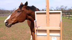 Ce cheval a sauvé sa vie en peignant des