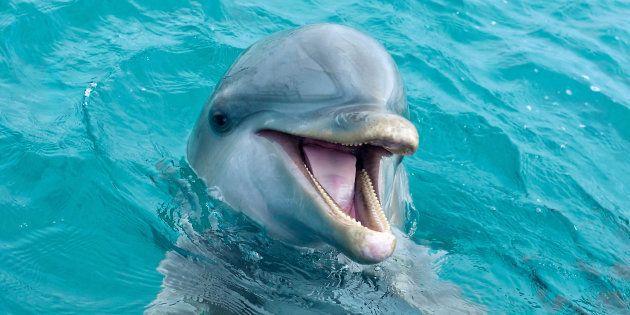 Cette start-up espère apprendre à parler le dauphin d'ici