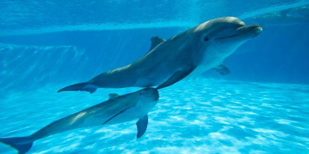 Moins de 50% des dauphins sauvages
