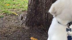 En chasse à l'écureuil, ce chien a encore beaucoup à