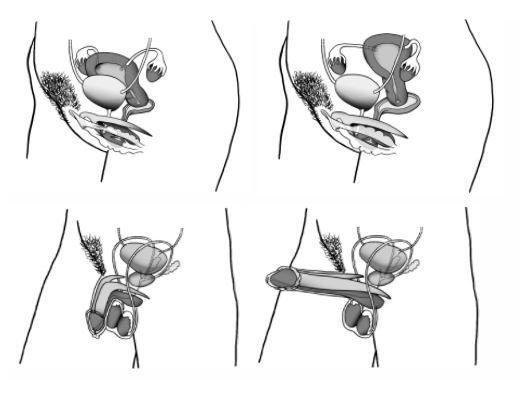 Le clitoris est enfin correctement représenté (mais dans un seul manuel scolaire de SVT sur