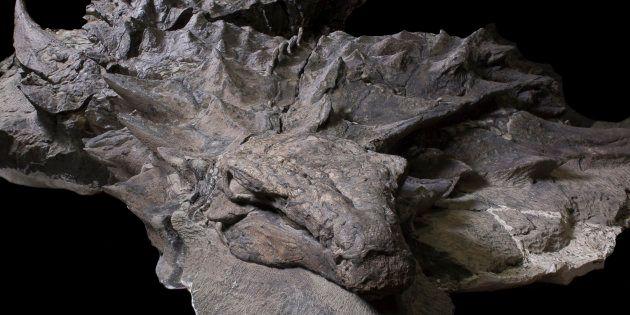 Ce dinosaure est parfaitement