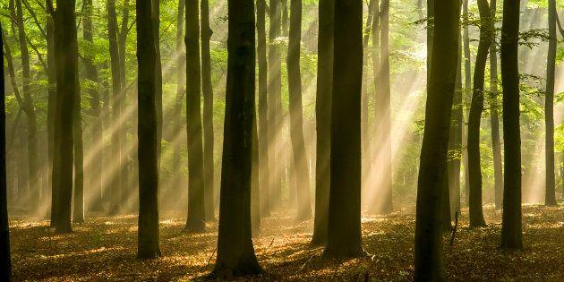 Journée mondiale de l'environnement: Les arbres ont une vie secrète que nous n'imaginons pas