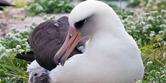 60 ans après, cet homme et l'albatros qu'il a soigné sont toujours
