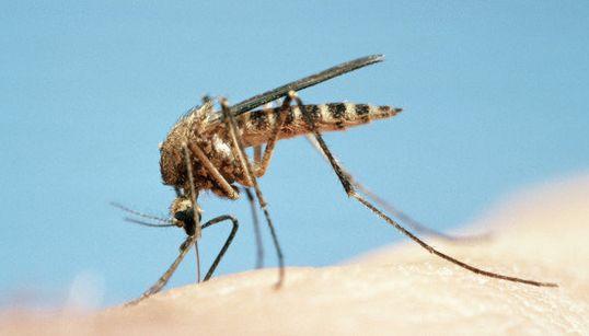 Comment savoir si une piqûre de moustique est plus grave qu'elle n'en a
