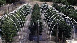 Voyage au coeur des plantations secrètes de cannabis en