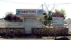 L'abattoir d'Alès fermé après une vidéo montrant des animaux