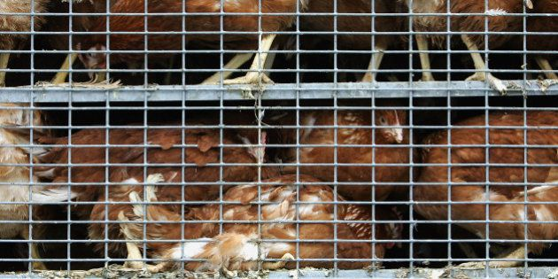 Vous n'achetez jamais d'œufs de poules en cage? Vous en mangez pourtant tous les