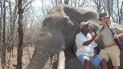Un chasseur allemand abat l'un des plus grands éléphants