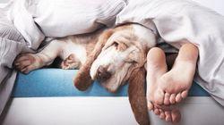 Dormir avec vos animaux n'est vraiment pas une bonne