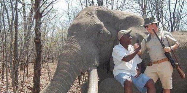Zimbabwe: la chasse de l'éléphant de plus de 50 ans par un touriste était