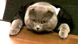 Nommer un chat en tant que manager de votre boîte pour faire parler