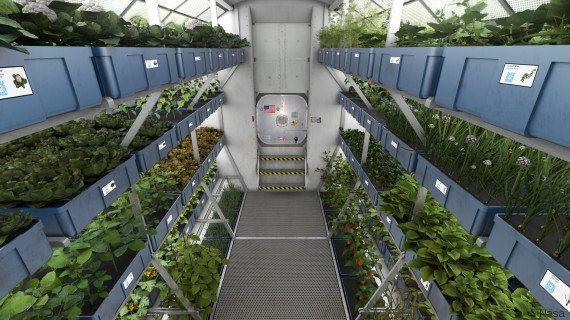 PHOTOS. Les astronautes de la Station spatiale internationale vont manger les premiers légumes cultivés...