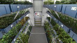 Des astronautes vont manger lundi les premiers légumes cultivés dans