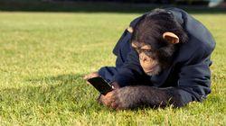 Pourquoi les zoos envahissent les réseaux