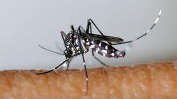 Zika, le nouveau virus transmis par les moustiques dont vous allez entendre