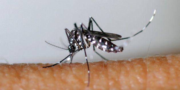 Zika, le nouveau virus transmis par les moustiques tigres dont vous allez entendre