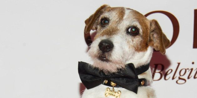 Uggie the dog from the film 'The Artist' poses on the red carpet for the Friars Club Roast of Betty White...