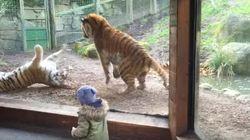 Il ne faut jamais réveiller un tigre. Même quand on est un