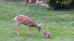 Bambi et Panpan sont amis aussi dans la vraie