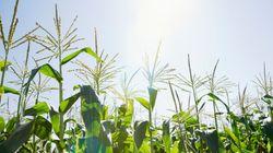 Le débat sur les OGM est dépassé, la vraie question concerne les