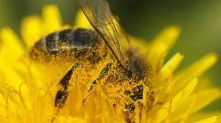 Les abeilles et le bouleversement