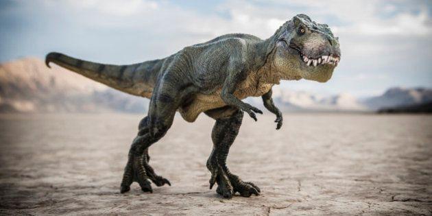 Tyrannosaurus rex dinosaur in desert