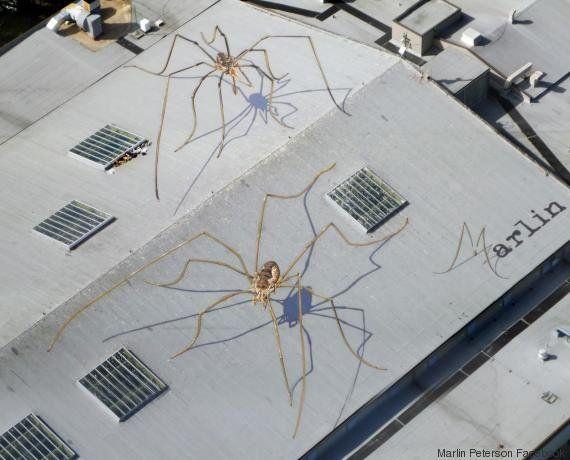 VIDÉO. Street-art: cet artiste fait des œuvres sur les toits pour des vues