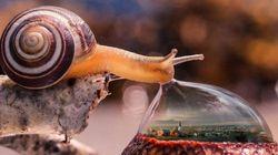 Cet escargot vaut le