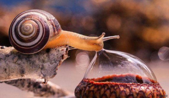 PHOTOS. Cet escargot se désaltérant vaut le