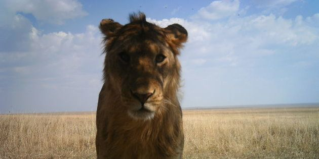 PHOTOS. Parc du Serengeti : les clichés incroyables d'animaux prises par 225 caméras
