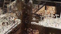 15.000 abeilles sont venues s'agglutiner sur la vitrine d'une