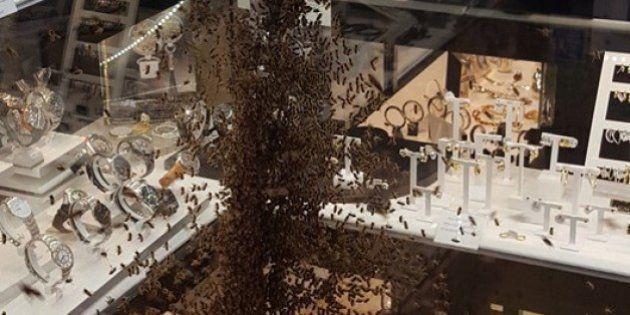 VIDÉOS. À Montpellier, 15.000 abeilles sont venues s'agglutiner sur la vitrine d'une